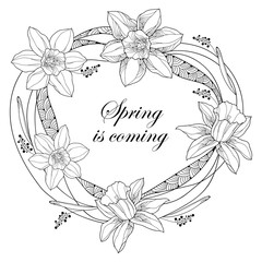 Vector round frame with outline narcissus or daffodil flowers and ornate leaves isolated on white background. Floral elements for spring design and coloring book. Spring is coming in contour style.