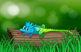 Colorful lizard on wooden log