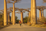 Baobab Alley in Madagascar, Africa. Beautiful and colourful land