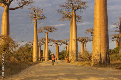 Papiers peints Baobab Baobab Alley in Madagascar, Africa. Beautiful and colourful land