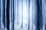Helles blaues Licht im verschneiten Wald