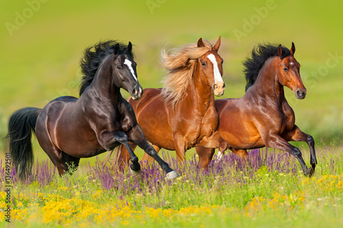 Fotobehang Paarden Horses run gallop in flower meadow