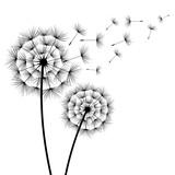 Two flowers dandelions silhouette