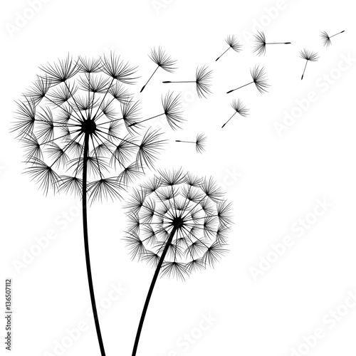 two-flowers-dandelions-silhouette