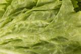 Fresh Lettuce isolated on white background.