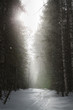 heavy snow and the light of the sun on the narrow forest path