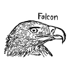 vector illustration sketch hand drawn with black lines of falcon's head isolated on white background
