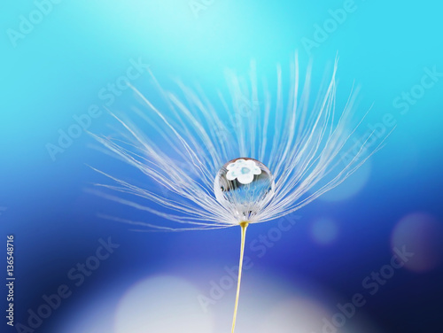 Zdjęcia na płótnie, fototapety na wymiar, obrazy na ścianę : Beauty water drop rain dew on a dandelion seed with reflection of flower on a blue background macro. Light air dreamy artistic image.