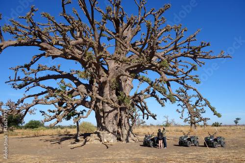 Arrêt devant un baobab sacré dans la savane africaine