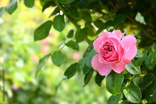 Foto op Plexiglas Zwavel geel Blumen 759
