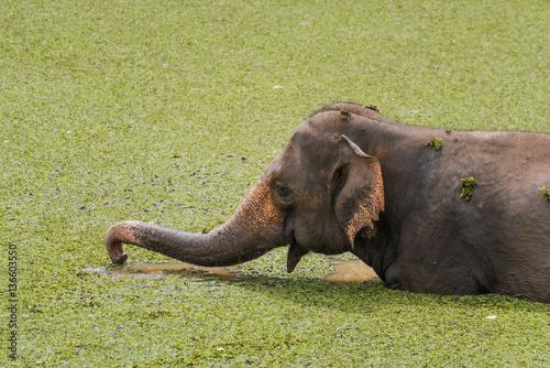 Poster Elefanten beim baden im See