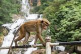 Affen auf einem Geländer