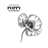 Hand drawn poppy isolated on white background. Flowers sketches elements. Retro hand-drawn floral vector illustration.