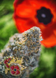 Cannabis bud in front of a poppy flower - medical marijuana for