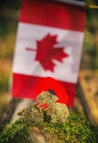 Cannabis buds in front of a Canadian flag - medical marijuana co