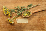 Tansy. Dried herbs. Herbal medicine, phytotherapy medicinal herb