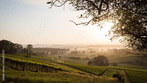 Sunrise across Hunter Valley vineyards