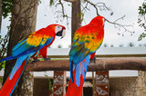 Two colorful macaw sitting on a branch near