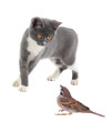 gray cat and sparrow