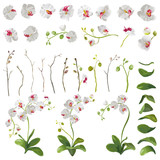 Orchid Tropical Flowers Floral Elements in Watercolor Style. Vector