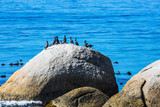 African penguins and boulders on the Atlantic