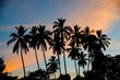 Silhouette of palm trees against tropical sunset sky