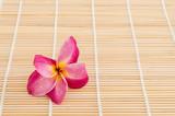 Pink Plumeria flower on wooden background