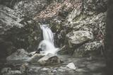 Forest stream in wilderness