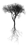Black naturalistic bare tree with root system - vector illustration - 136759153