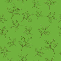 Seamless pattern with tea leaves on green background. Hand drawn vector illustration.