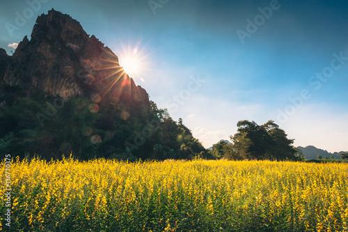 Vintage Yellow Field