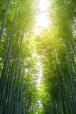 Bamboo forest with sun flare at Arashiyama, Japan