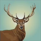 Colorful deer illustration. Background with wild animal. Vector illustration
