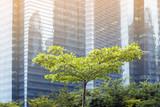 green tree in city