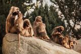 Lüstige Affen
