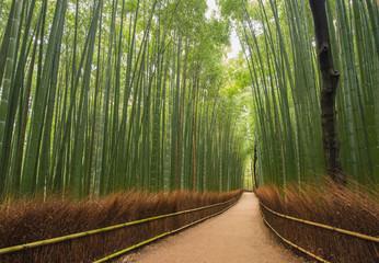 Kleiner Weg im Bambus-Wald, Kyoto, Japan