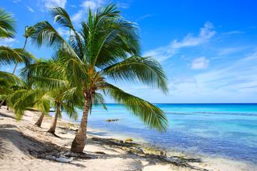 Caribbean sea and palms.