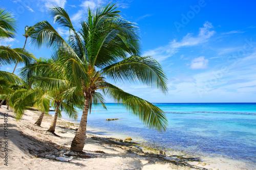 Morze Karaibskie i palmy.
