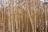 стебли рогоза, тростника, бамбука