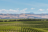 aerial view of New Zealand vineyards across rolling hills