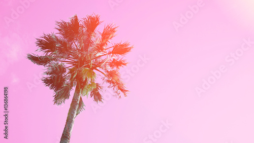 Aluminium Purper One palm tree on blue sky background. The bottom view, sun glare. Pop Art color. Sun glow effects.