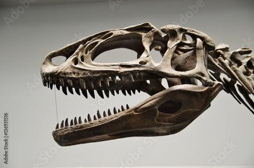 肉食恐竜の頭部骨格 Poster