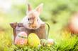 Leinwanddruck Bild - Osterkarte