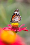 Butterflies, flowers, nature