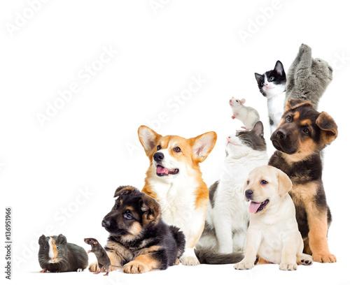 set pet looks - 136951966