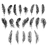 Vector Black and White Feather Pattern - 136956111