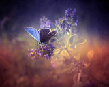 Butterfly in the nature at spring
