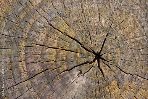 Abstract Background Texture Of Freshly Chainsaw Cut Wood - 136996751