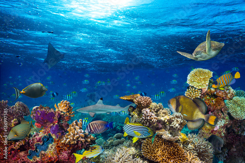 colorful underwater coral reef background with many fishes turtle shark and marine life