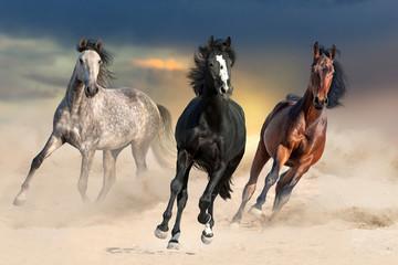 Three beautiful horse run gallop on desert dust against sunset sky